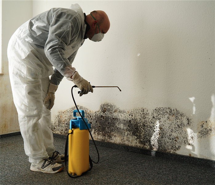 Commercial Safety Practices of Mold Remediation Experts