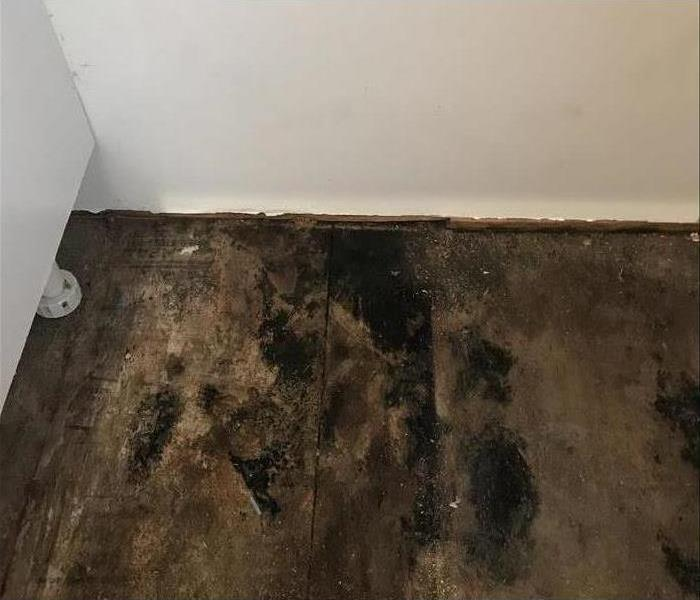 Why SERVPRO Secondary Damage: Finding Mold After a Flood