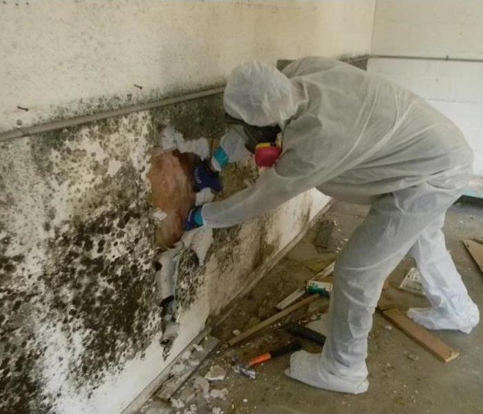 Mold Remediation Davis County Residents:  Follow These Mold Safety Tips If You Suspect Mold