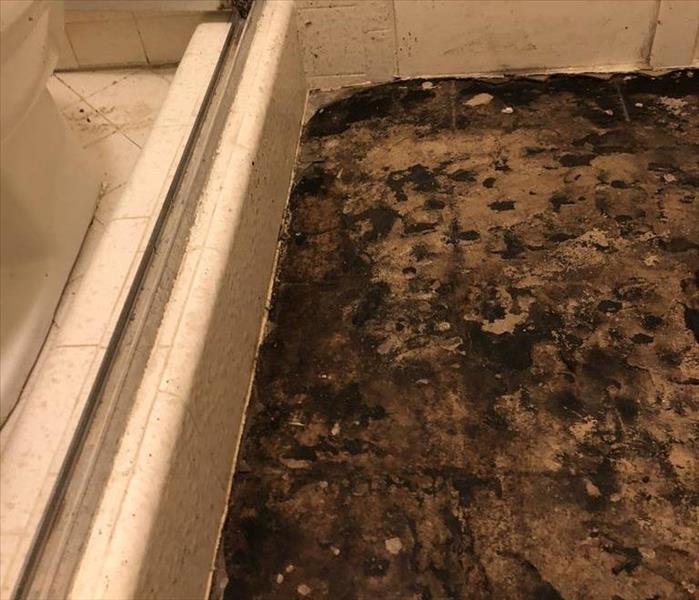 Black mold growing under linolium.
